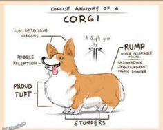 Anatomy of a Corgi