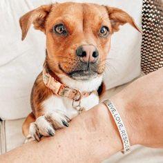 'I'm Speaking' for Animals Set