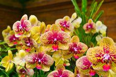 orchideen - Google-Suche
