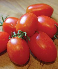 Tomato, Viva Italia Hybrid