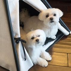 Give us a call when it is Friday ok? ・・・ #gobacktobed ・・・#maltese #twodogs