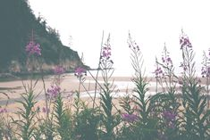 Off The Beaten Path: The Oregon Coast | Free People Blog