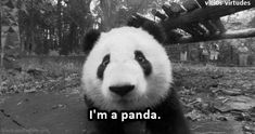 Yes you are. And a cute one at that! :))