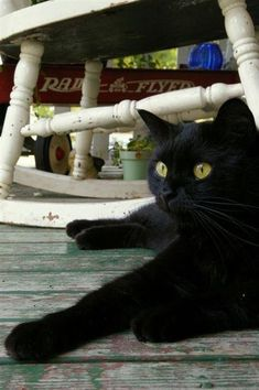 """""""I'm as nervous as a long-tailed cat in a room full of rocking chairs."""" --Tennessee Ernie Ford"""
