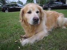 https://youtu.be/lHVypgB56a Ein FREUND fürs Leben: unser Hund Columbo - unvergessen ... www.hunde-buch.com
