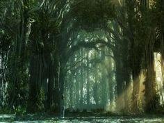 Imagenes - FONDITOS: El Bosque Mágico - Fantasia, Paisajes