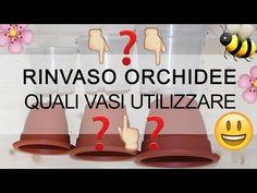 Rinvaso Orchidee - Quali vasi utilizzare & il MITO sul vaso trasparente - YouTube Outdoor Life, Flora, Plants, Youtube, Terrazzo, 3, Gardening, Mini, Nature