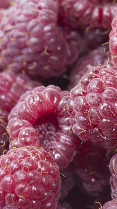 Download Wallpaper 720x1280 Raspberry, Berry, Ripe Samsung Galaxy S3 HD Background