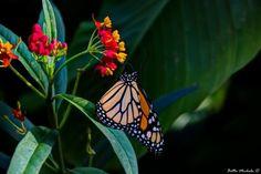 Butterfly by Michela Botta