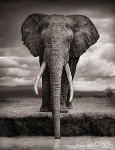 Photographie animale