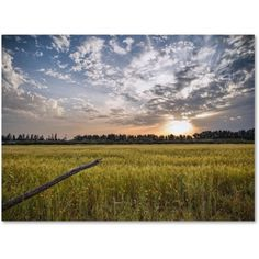 Trademark Fine Art End of Day Canvas Art by Giuseppe Torre, Size: 16 x 24, Multicolor