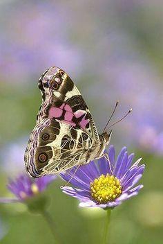 https://www.facebook.com/FlowersAndColourfulButterflies/photos/pcb.638387403000742/638387383000744/?type=3