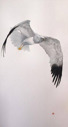 Karl Martens, MARSH HARRIER | The Wykeham Gallery