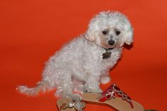 Red Sandals, Leather Sandals, Mystique Sandals, Types Of Women, Dogs, Handmade, Animals, Shopping, Collection