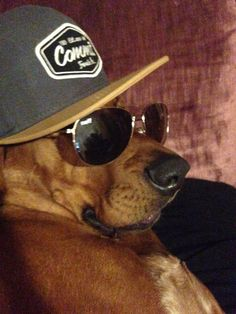 my dog Raleigh