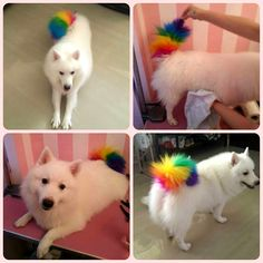 Pet hair dye – temporary color hair dye – dog hair color, dying your dog's hair with OPAWZ haha what even