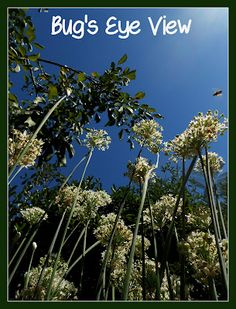 Handbook of Nature Study: Outdoor Hour Challenge - Insect Grid Study and Bug's Eye View