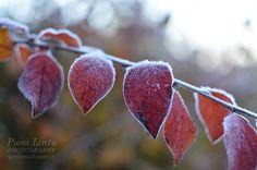 -3°C/26,6°F Autumn Photos, Fruit, Fall Cover Photos, The Fruit, Autumn Pictures