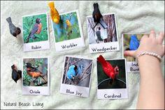Backyard Birds, Printables,Bird watching chart, Safari Toobs,toddlers, preschool, nature, Montessori,Charlotte Mason nature study,www.naturalbeachliving.com