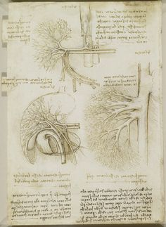 Recto: The vessels and nerves of the neck. Verso: The vessels of the liver   Royal Collection Trust