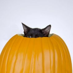 Watch out...Halloween is coming.