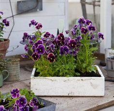 Nu kan du tjuvstarta våren i växthuset | Leva & bo | Expressen