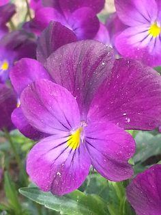 Spring Flowers and wedding arrangements.