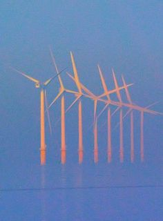 Angry Birds? No, But Obama's Wind Energy Subsidies Have Them Very Frightened