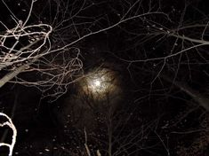 Capricorn Moon, Dark Forest, Lose My Mind, Purple Aesthetic, Abandoned Places, Some Pictures, Digital Art, Photography, Outdoor
