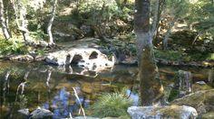 Paisaje senda fluvial río Arenterio Goats, Animals, Scenery, Fotografia, Animales, Animaux, Animal, Animais, Goat