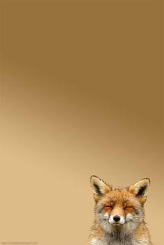 quick brow fox…