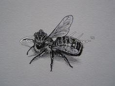Queen Bee | Rory Dobner