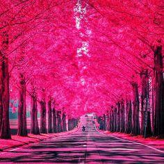 紅葉も素敵デスが、こんなpinkの並木道を恋人同士で歩いてみたくありませんか♡ pinkには、色彩心理学的にもマイナス面が少ないという特徴があるのデス★ 続きはコチラ➡︎➡︎➡︎  http://ameblo.jp/bienfukuoka/entry-12229539307.html  #beauty #sweet #heart #face #loveyou ##instagramers #i #beauty #sweet #heart #face #loveyou  #色彩 #ポイントメイク #pink #婚活 #恋愛 #シンデレラ #女子 #第一印象  #愛 #ブログ #アメブロ