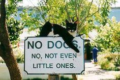 Kitty guard!