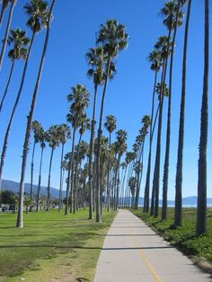 A beautiful day in Santa Barbara's East Beach, California - how I miss walking along the boardwalk to Stearn's Wharf! Santa Barbara California, California Coast, California Dreamin', Ventura California, Places To Travel, Places To Visit, Travel Humor, North America, Beautiful Places