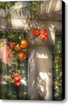 Flowers...Mike Savad