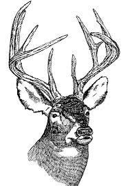Image result for vintage illustration