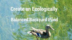 3 Easy Ways to Create an Ecologically Balanced Backyard Pond