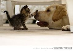 Funny Dogs And Cats — Thou Shalt Not Pass, Dog!