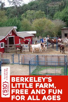 Tilden Park's Little Farm is fantastic and free. For the price of a head of lettuce or stalk of celery, you can get up-close-and-personal with cows, piglets, chickens, goats, bunnies, and more. #510families  | Berkeley's Little Farm, free and fun for all ages |