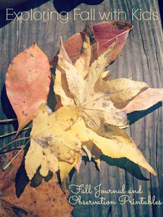 Activities for Exploring Fall with your Child including Printable  Journal and Observation Sheet