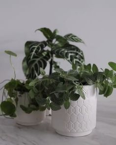 10 Best Low Light Indoor Plants for Your Home and Office - My Tasteful Space Easy House Plants, House Plants Decor, Plant Decor, Plantas Indoor, Luz Solar, Zebra Plant, Decoration Plante, Best Indoor Plants, Jade Plants