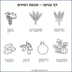 tu b shvat coloring pages - photo#39