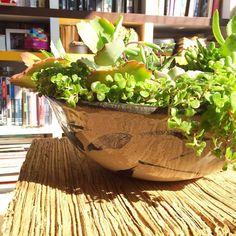 Cuba em cerâmica iluminada como o dia. À venda na @casastopa  #plantinhas #decoração #ceramica #arranjodemesa #suculentas #suculovers #oitominhocas | contato: oitominhocas@gmail.com