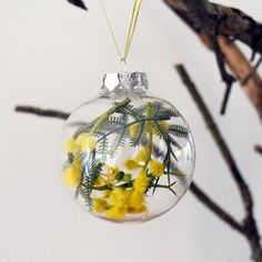 Set of 4 Australian Golden Wattle Christmas Baubles What better decoration for an Aussie Christmas tree than our gorgeous national floral emblem, the golden wattle. This clear acrylic shatterproof bauble is filled with sprays of synthetic flowers and leaves, and comes ready to hang with a gold and silver ribbon. Each bauble measures 8cm (3.1in) in diameter. Also available as individual baubles . See link below…