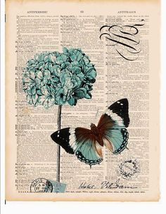 ortansia & butterfly