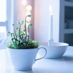 Hyvää huomenta ☕️God morgon ✨ Good morning #keittiö #hyväähuomenta #jouluruusu #kök #godmorgon #julros #kitchen #helleborus #goodmorning