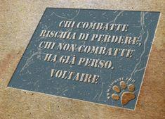 """Non ci lascia (giustamente) possibilità di scelta Voltaire:  """"Chi combatte rischia di perdere, chi non combatte ha già perso.""""  Voltaire  #voltaire, #citazioniItaliane, #citazionifotografiche,"""