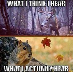 Out drives me crazy. Think I am most alert in a stand. Never heard so many noises. Lol