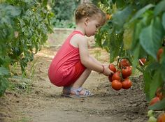1. Plant a garden at home. girl picking tomatoes in garden